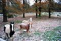 Horses (3053329654).jpg