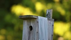 Податотека:House wren - food drops.ogv