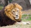 Houston Zoo 2010 -17 (5309905250).jpg