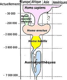 Homo Sapien dans PEUPLES ANCIENS 220px-Human_evolution