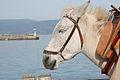 Hydra Mule with lighthouse.jpg