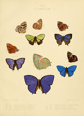 Illustrations of diurnal Lepidoptera British Museum Catalogue VIII.jpg