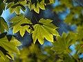 In Japanese garden, Portland (4333295582).jpg
