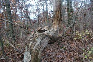 Blue Mound State Park - Image: Indiantreemarker