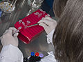 Inoculation des plantes avec des bactéries fixatrices d'azote et transfert dans les tubes stériles IJPB Versailles-36-clic (22726174748).jpg