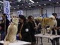 International Dog Show 2018 04.jpg