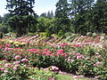 International Rose Test Garden, Oregon (2013) - 5.jpeg