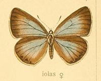 Iolanaiolasf.jpg