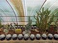 "Iran-qom-Cactus-The greenhouse of the thorn world گلخانه کاکتوس ""دنیای خار"" در روستای مبارک آباد قم- ایران 18.jpg"