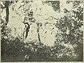 Iron ores, salt and sandstones (1909) (14595499058).jpg