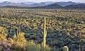 Ironwood Forest National Monument (28762009994).jpg