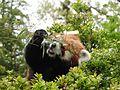 Ishikawa Zoo - Animals - 41 - 2016-04-22.jpg