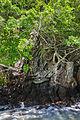 Isla Phi Phi Lay, Tailandia, 2013-08-19, DD 15.JPG