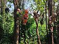 Isla de las muñecas 6.jpg