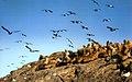 Isla de los Lobos, Mar Argentino, Argentina - panoramio.jpg