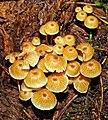 Isojärvi National Park - fungi.jpg