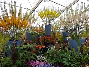 Hampton Court Palace Flower Show - Image: Jacques Amand at Hampton Court 2016 flower show 01