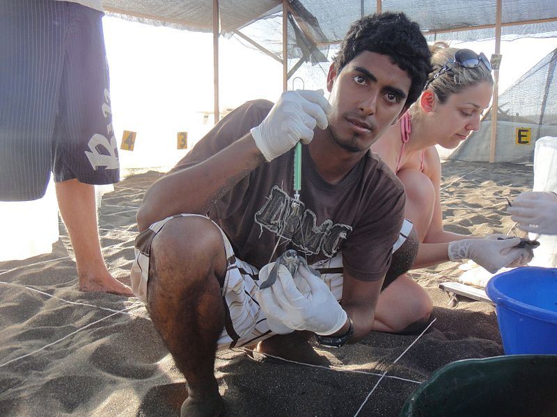 Jairo Mora Sandoval crouches on a beach partitioned for a conservation survey