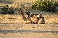 Jaisalmer (Rajastão), RTW 2012 (8405177647).jpg