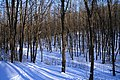 January in a Forest Park - panoramio.jpg