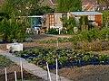 Jardins familiaux Tourcoing J3.JPG