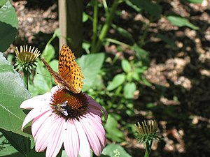 Jason Riedy - Butterfly and bee sharing a meal...