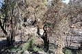 Jerusalem March 2014 (15549191211).jpg