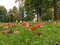 Jesenný Budatín - panoramio.jpg