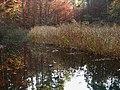 Jeziorko w wąwozie - panoramio.jpg