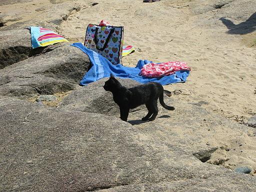 Jielbeaumadier chat noir algajola 2009