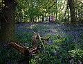 Jubilee woods.jpg