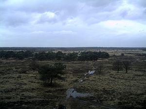 Heath of Kalmthout (Kalmthoutse Heide) from wa...