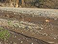 Karawane in Wadi.JPG