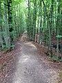 Keltenwall bei Weltenburg - geo.hlipp.de - 26018.jpg
