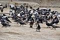 Khanqah Baybars Al Jashankir, photo by Hatem Moushir 11.jpg