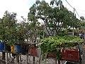 Kitchen Garden Pulau Ketam.JPG