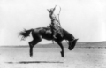 Kitty Canutt, champion lady rider of the world, on Winnemucca.png