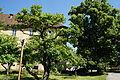 Kloster Ensdorf AS 028.JPG