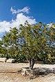 Kouklia, Cyprus - panoramio (63).jpg