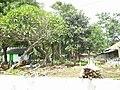 Kuburan Desa Bendungan, Lebakwangi, Kuningan - panoramio.jpg