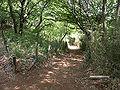 Kurokawa 06b6129s.jpg