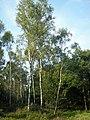 Lüneburger Heide 045.jpg