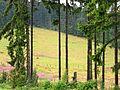 LSG Medebach - Nähe Stolberg Hütte (2).jpg