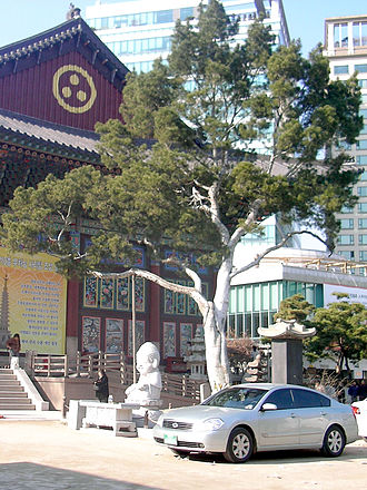 Pinus bungeana - Lacebark pine to the east of the Main Hall at Jogyesa (Buddhist Temple) in Seoul, South Korea