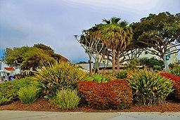 Laguna Beach California United States - panoramio (8)