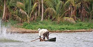 , Boat trip on Lake Victoria: Fisherman chasin...