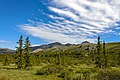 Landscape with tors, clouds and spruce trees in Ivvavik National Park, YT.jpg