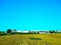 Large Dairy Farm - panoramio.jpg