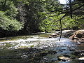 Larrys Creek in SGL 114.jpg