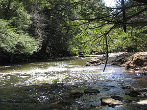 Larrys Creek - Larrys Creek in Cogan House Township, heading south through State Game Lands 114. Most such land was acquired by the state after being clear-cut.